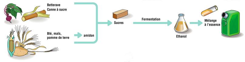 Procédé de fabrication du bioéthanol
