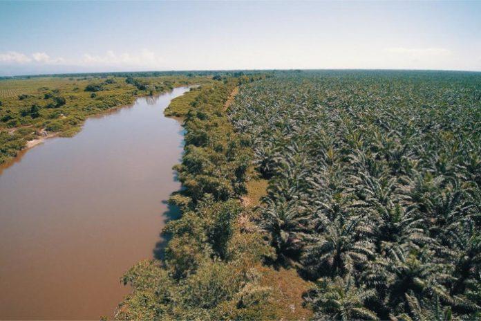 biocarburants huile de palme
