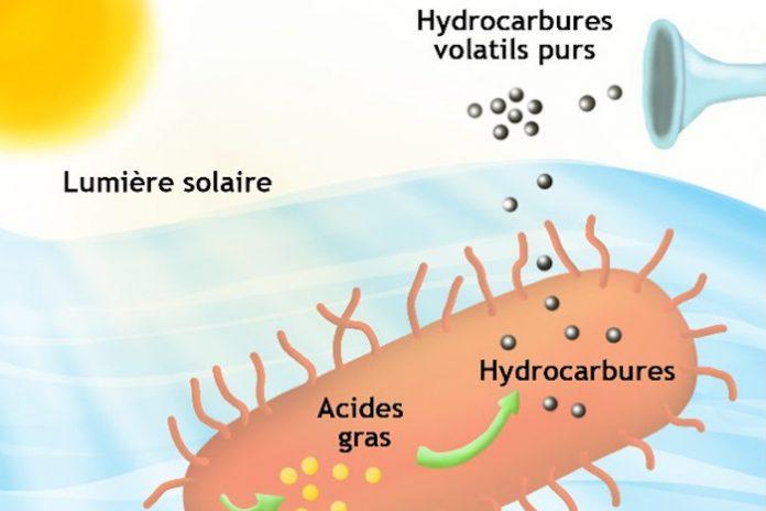 E Coli hydrocarbures CEA