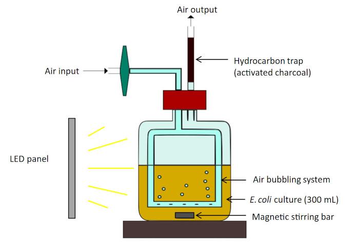 Schéma du système de culture utilisé pour la photoproduction d'hydrocarbures par les cellules E. coli.